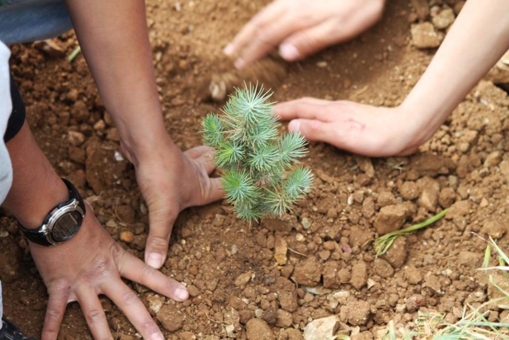 Bellanatura   ¿Por qué es importante la reforestación?