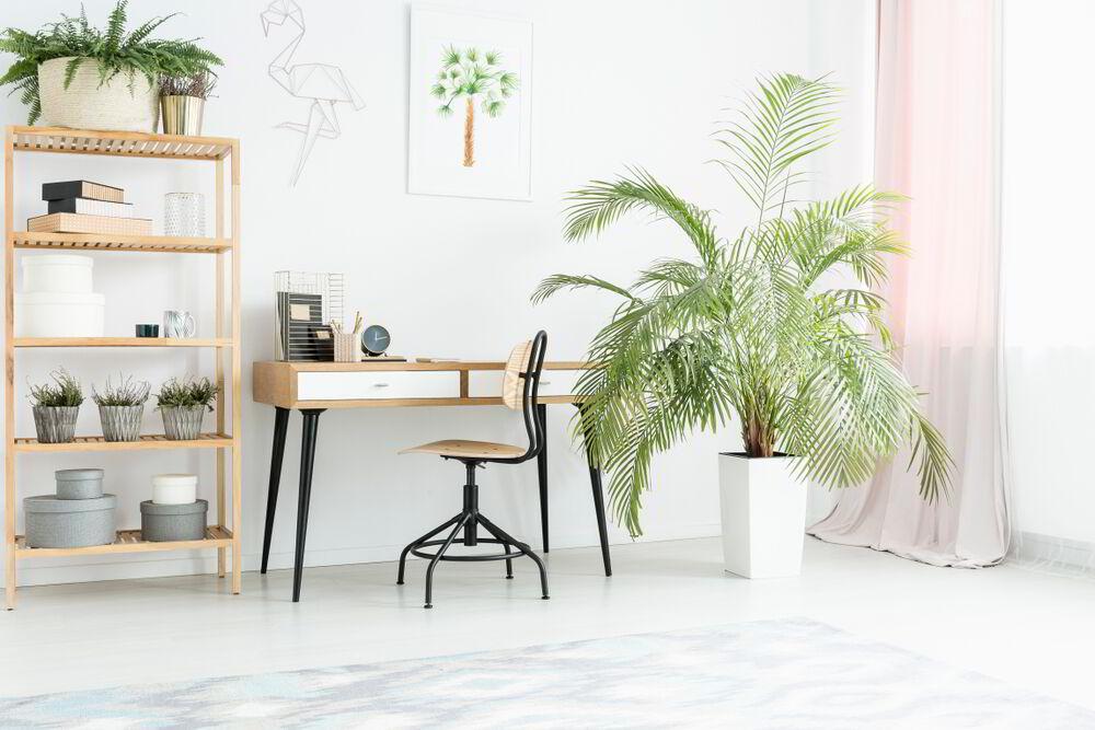 Bellanatura | 5 razones para tener plantas en el interior de tu casa