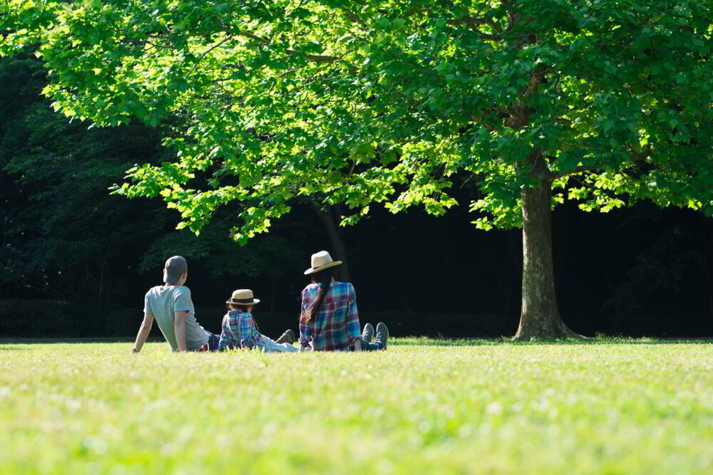 Bellanatura | ¿Qué árbol representa a tu familia?