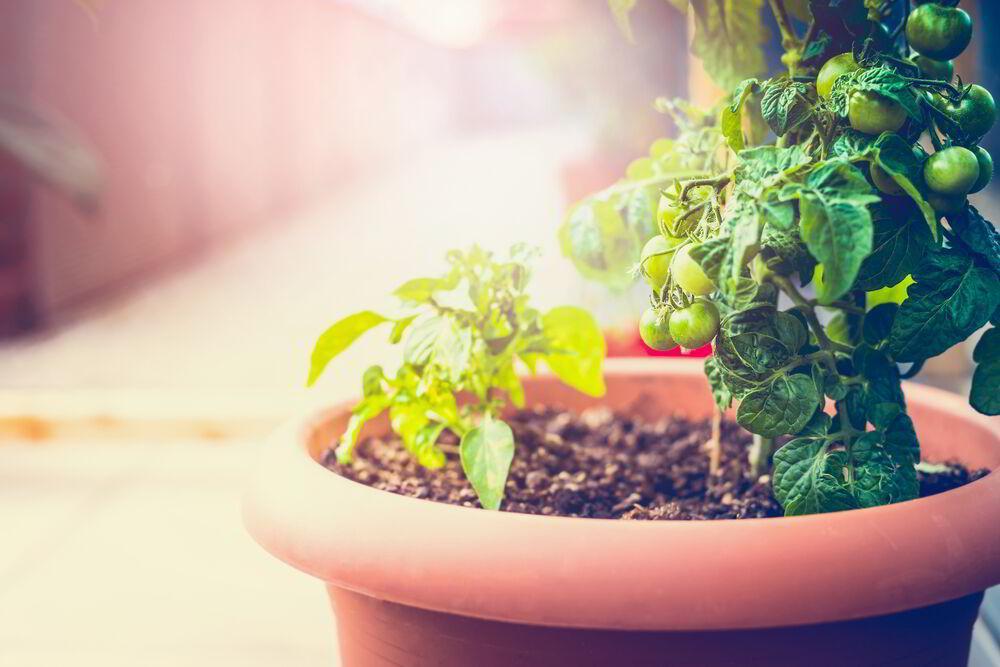 jardinería, sustentable, verde, apartamento