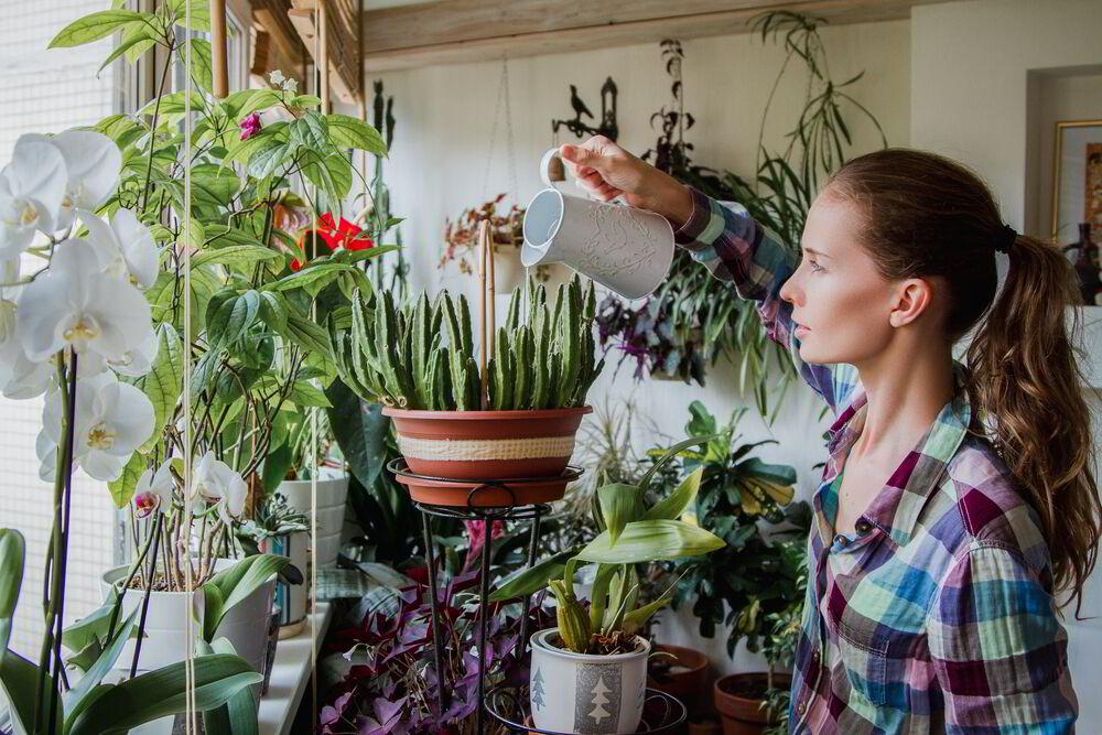 ecología, plantas, medio ambiente, frescura