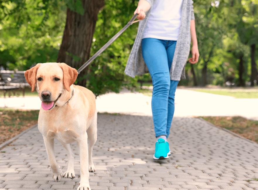Bellanatura | Caminar: El ejercicio perfecto