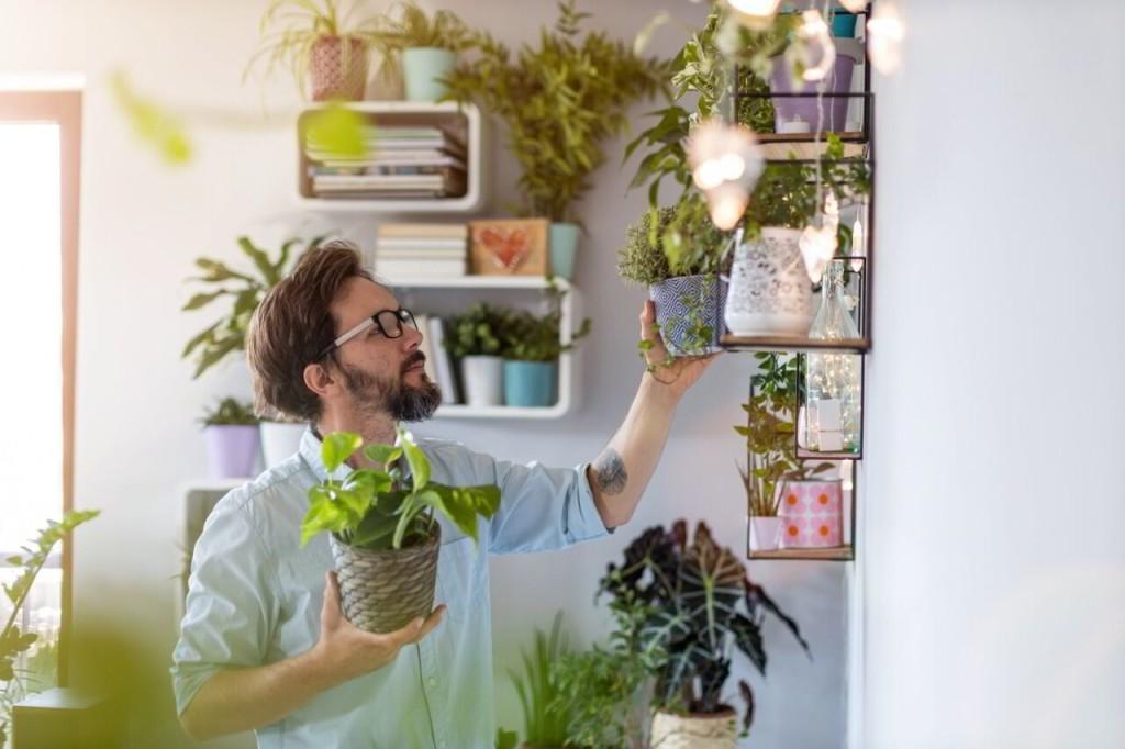 Bellanatura   5 ideas para llevar la naturaleza hasta tu casa