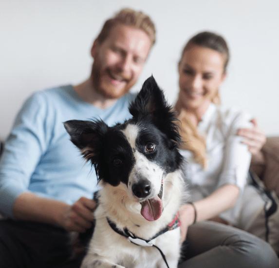 Bellanatura | ¿Cómo mantener a tus mascotas activas dentro de casa?